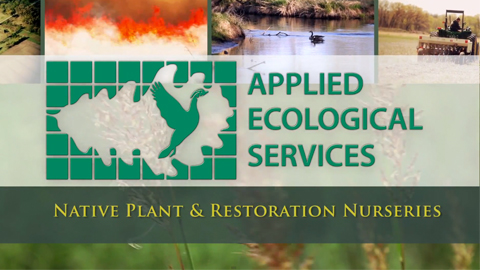 Taylor Creek Restoration Nurseries – VIDEO